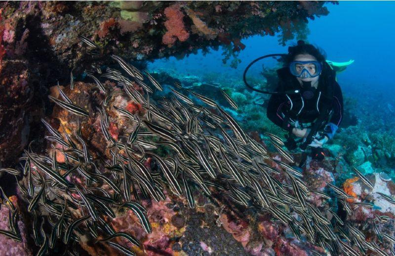 observando la vida marina