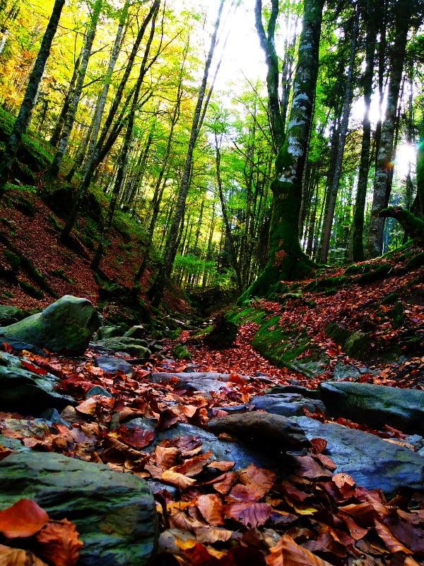 bosque reducido