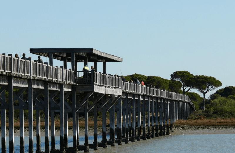 puente de la algaida