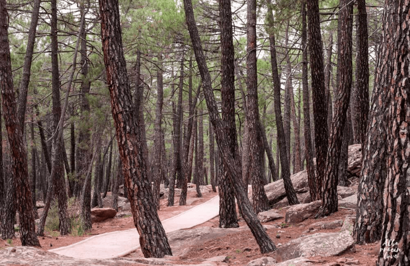 pinares-rodeno-albarracin