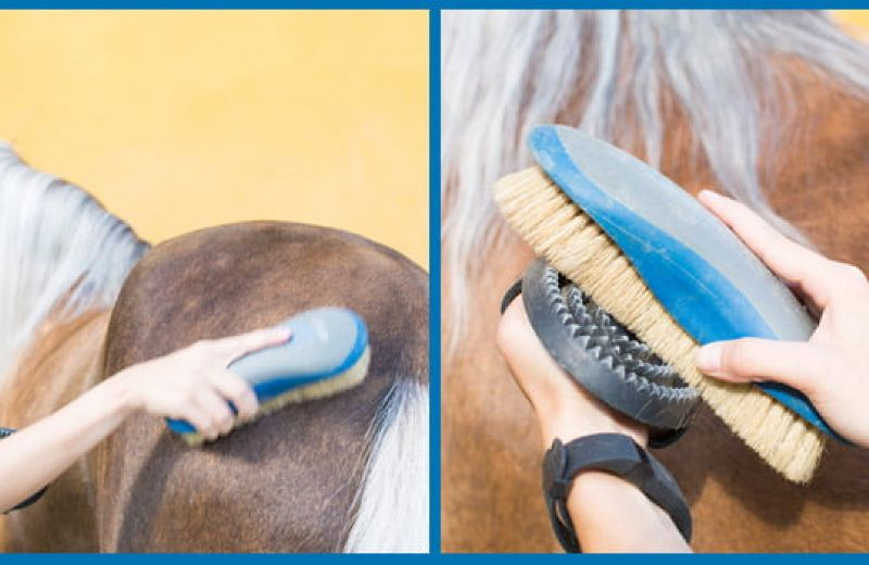 3-la-limpieza-diaria-del-caballo-blog-equitacion-decathlon-11062015