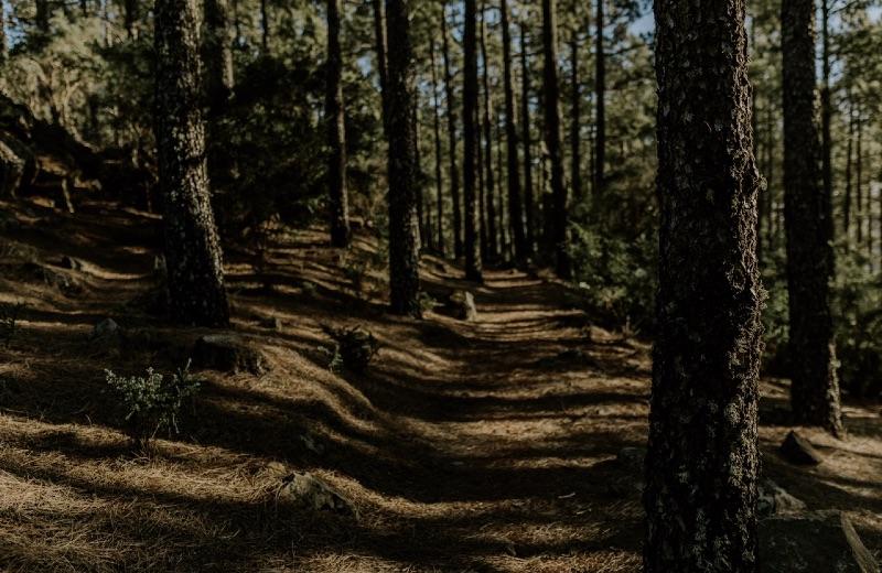 El camino.