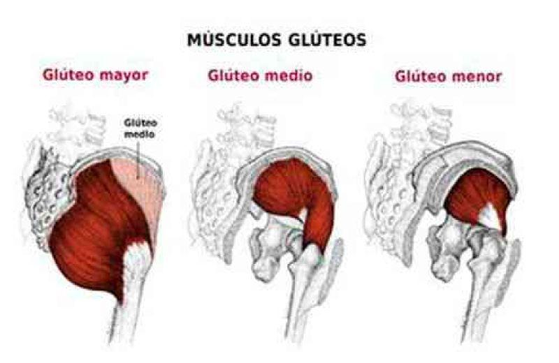 partes-del-gluteo-1