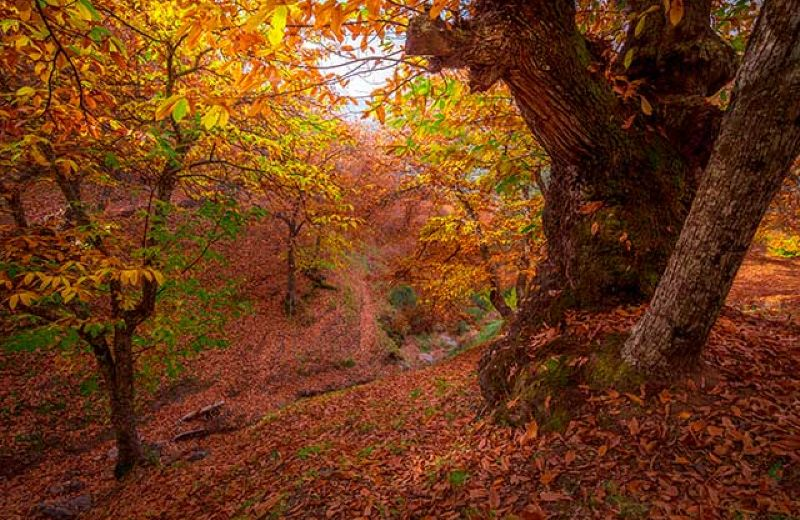 bosque-de-genal