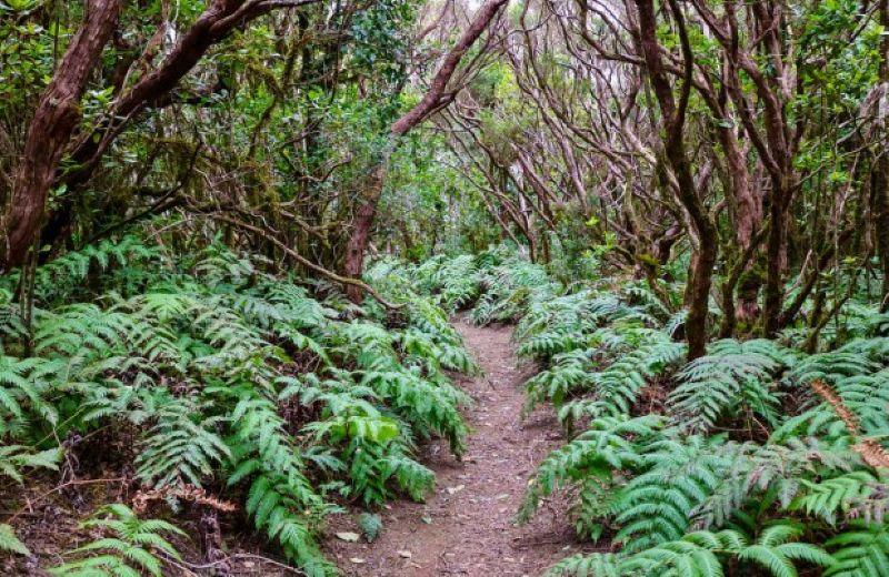 Reserva Pijaral