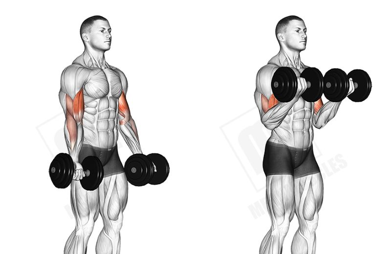 dumbbell-bicep-curl