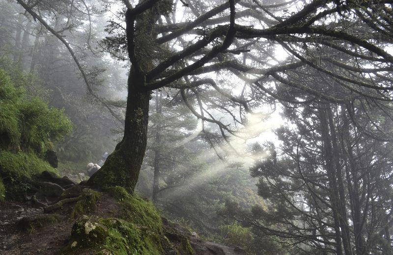 bosque en nepal-min