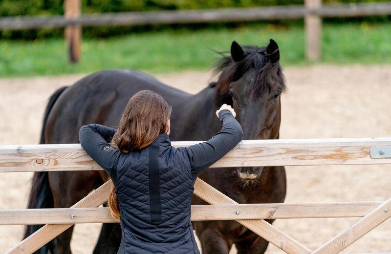 caballo exterior