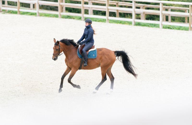 entrenamiento caballo