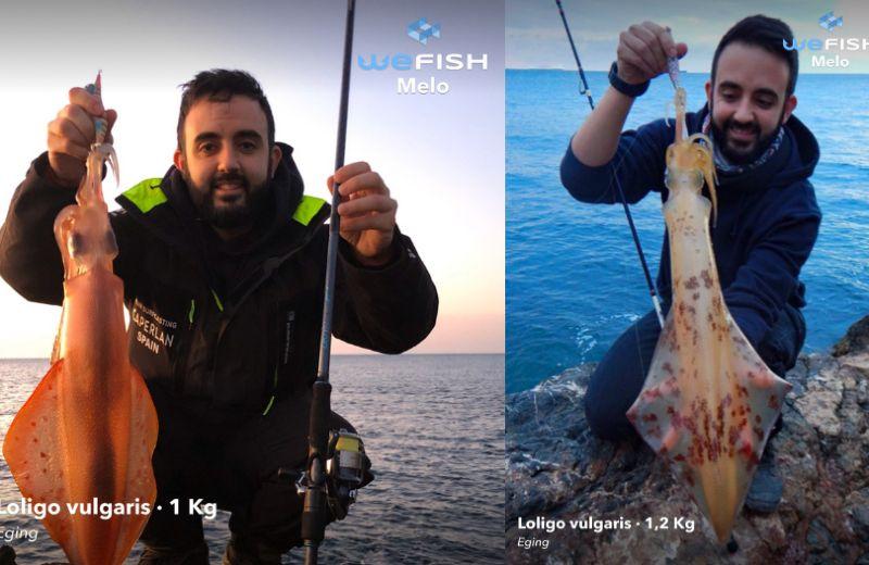 Pesca calamares