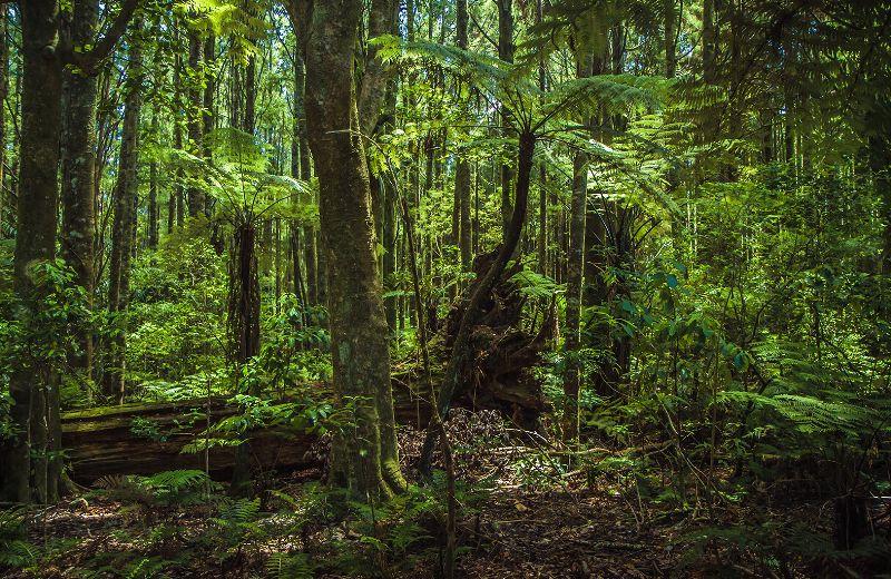 banos_bosque_1