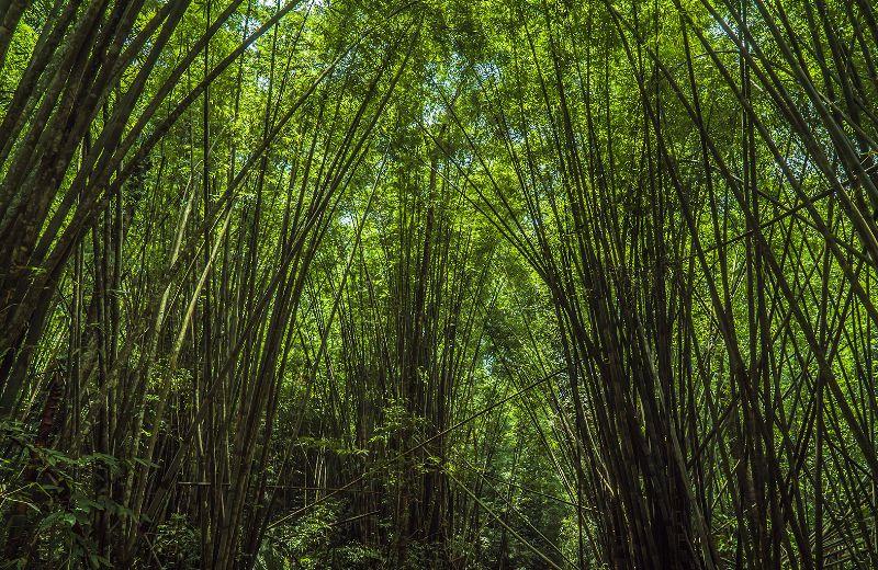 banos_bosque_3