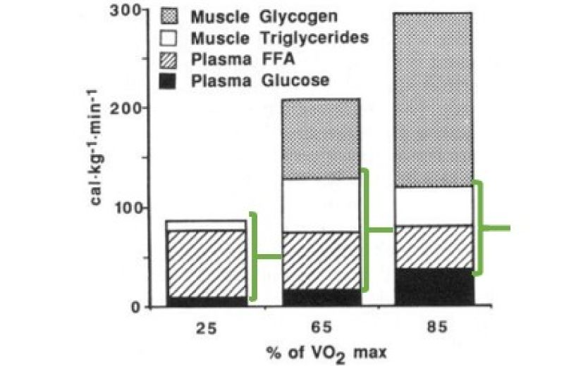 Ilustración 1. Utilización de carbohidratos y grasas en función de la intensidad del ejercicio de Romijn y col (1993)