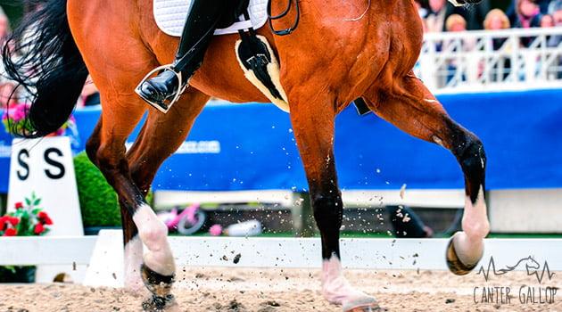 Doma Clásica | Blog Equitación Decathlon
