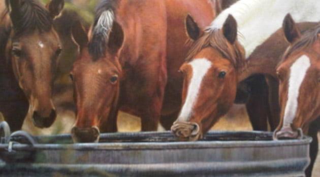 ¿Cómo debo alimentar a mi caballo? | Blog Equitación Decathlon