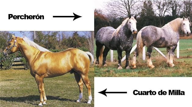 Razas de caballos | Blog Equitación Decathlon