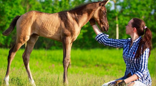 ¿Conoces lo que es el imprinting? | Blog Equitación Decathlon