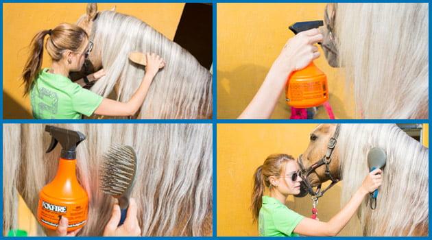 La limpieza diaria del caballo | Blog Equitación Decathlon