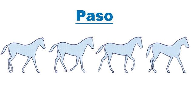 Los aires del caballo | Blog Equitación Decathlon