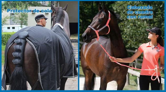 3-transporta-a-tu-caballo-blog-equitacion-decathlon-11082015