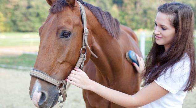 Amazona cepillando su caballo