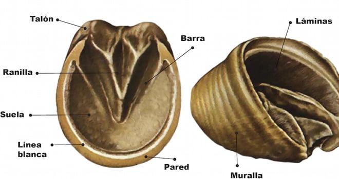 diagrama cascos