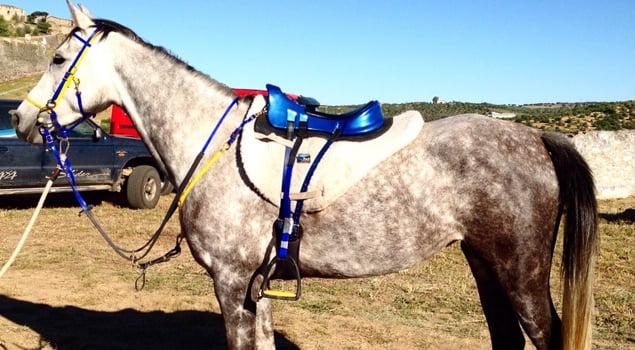 Tipos de sillas de montar a caballo Raid