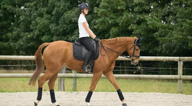 botas de equitacion-training 900-botas de montar-fouganza