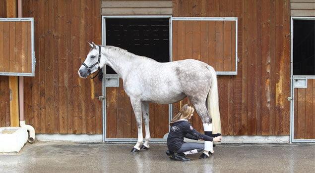 cuidados del caballo