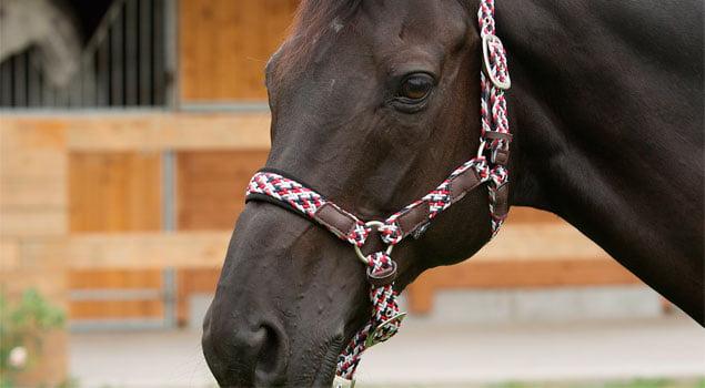 La salud dental del caballo