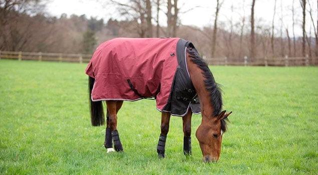 Mantas para tu caballo