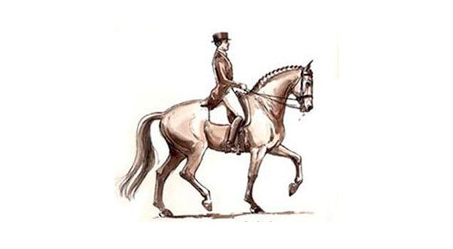 adiestramiento caballo