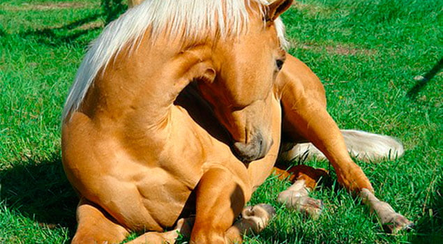 Sistema digestivo equino