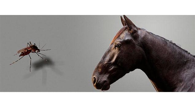 Insectos: los enemigos de tu caballo