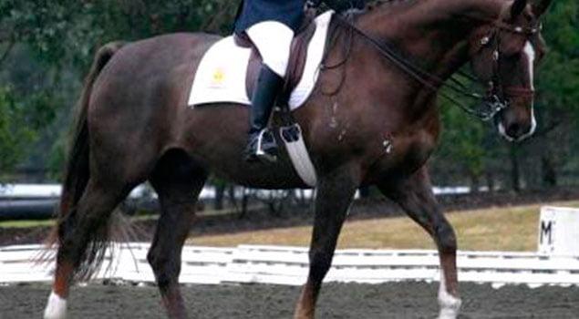 Los aires del caballo
