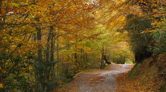 bosque otono