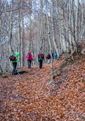 pico pazino-pista por el bosque