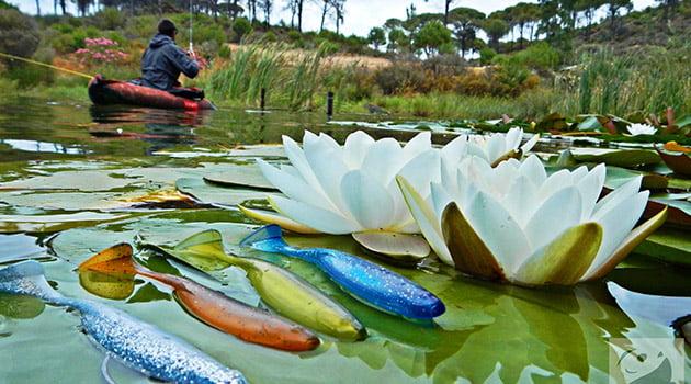 Pescando luciopercas en primavera | Blog Pesca Decathlon