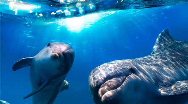 Descubre las riquezas marinas | Blog Submarinismo Decathlon
